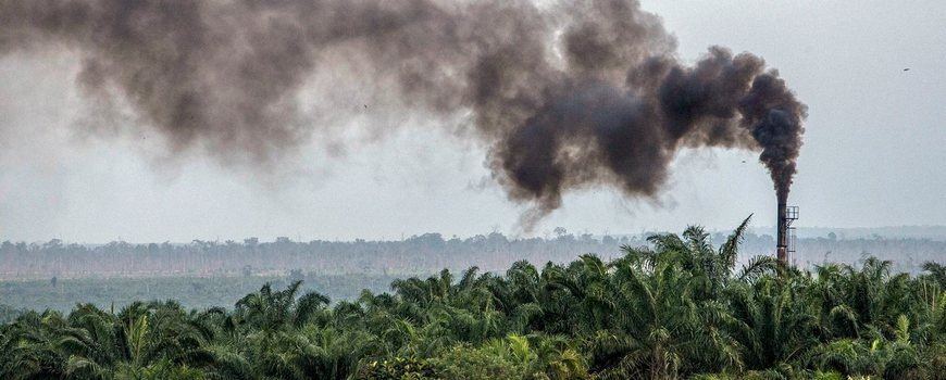 Palm-Oil-Plantation-in-Sumatra