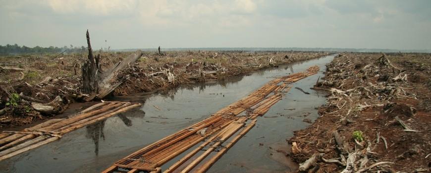 Deforestasi-Hutan-Indonesia
