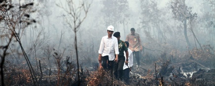 Jokowi-di-Hutan-Terbakar